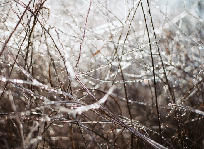 001_icy_645_0003
